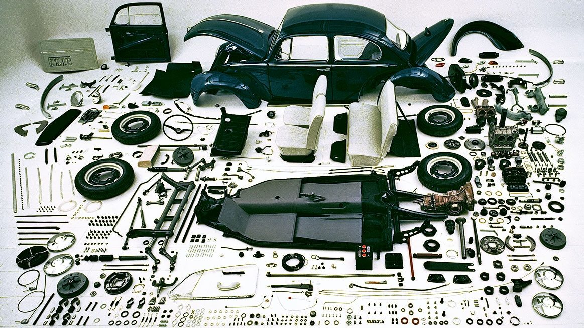 All The Parts Of A Beetle